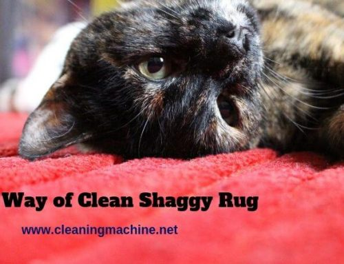 How to Clean a Polyester Shaggy Rug? (Easiest 3 Step Process)