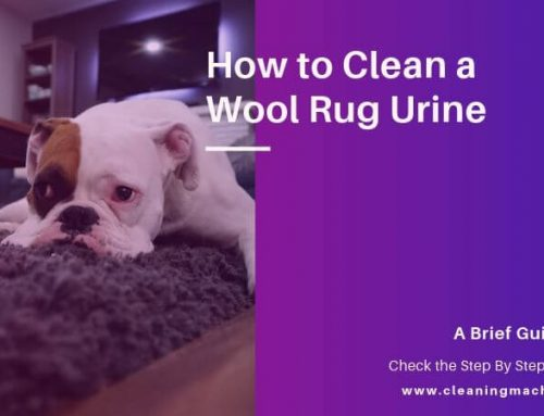 How to Clean a Wool Rug Urine [Dog & Cat Stain Removing Process]