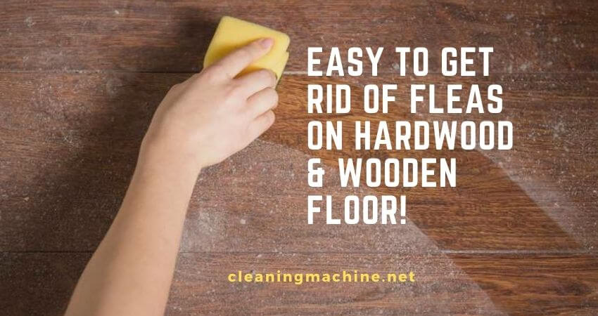 How to Get Rid of Fleas on Hardwood Floors